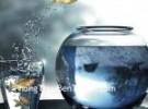 Cá trong nước kết hợp hai biểu tượng mạnh nhất về thịnh vượng