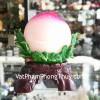 Đào hồng trắng lớn H336G
