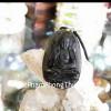 Phật đá hắc ngà tuổi Tuất + Hợi S6340-8