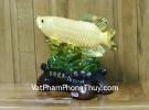 Cá Kim Long lướt sóng xanh C094A
