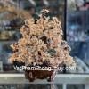 Cây thạch anh vàng đế bầu tròn KC103