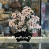 Cây tài lộc thạch anh trắng, thân bonsai KC118