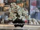 Cây tài lộc đông linh xanh, thân bonsai KC119