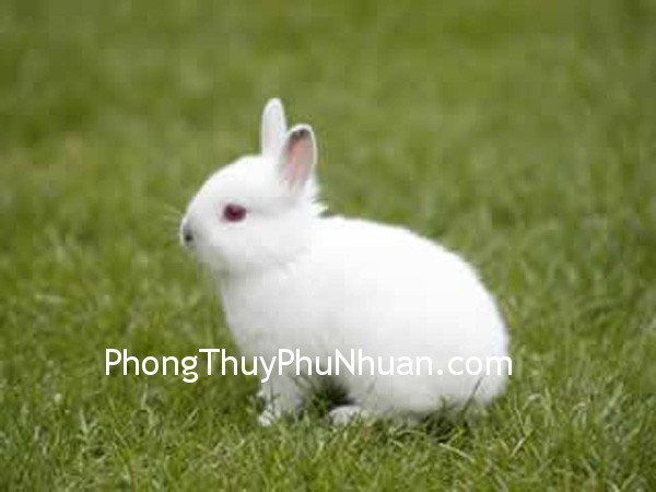 7f0a888e8dtho 2.jpg Đặt thỏ ở hướng Đông
