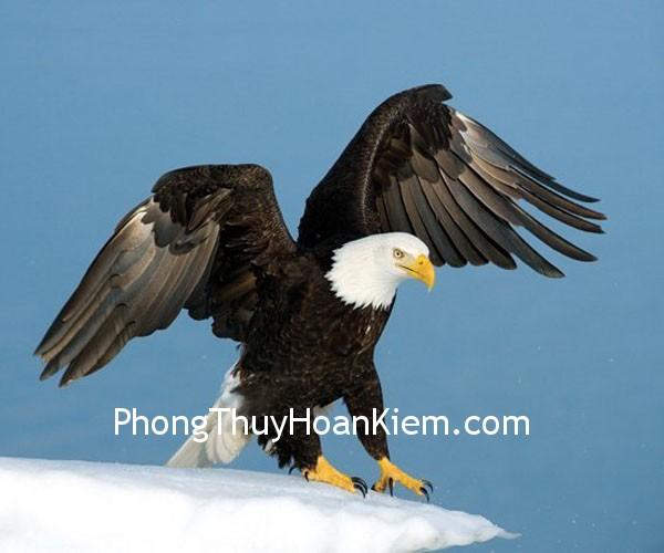 1e7c42c926i bang.jpg Ý nghĩa của tranh chim ưng
