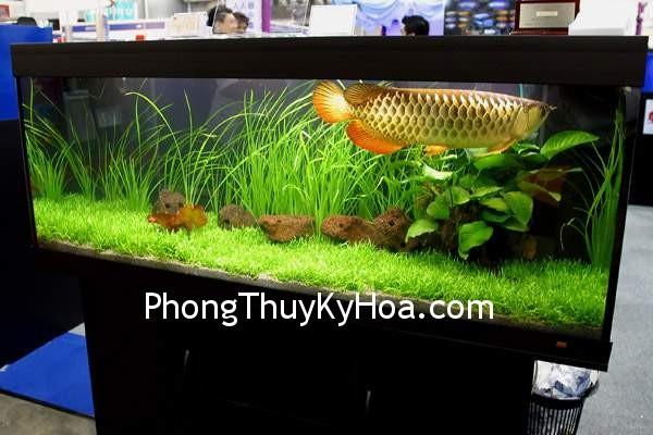 54bca35818canh 2.jpg Hồ cá trong phòng ngủ