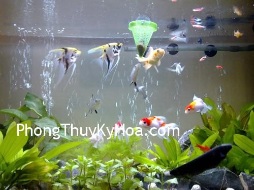 3191a1f25f079459.jpg Nên nuôi bao nhiêu cá