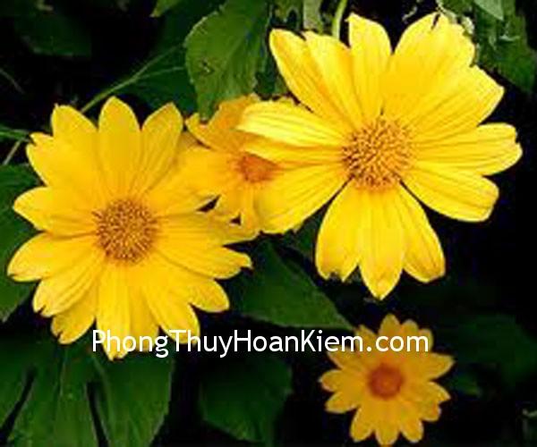 d150c20af7nh hoa.jpg Treo tranh ở cung đào hoa của phòng ngủ
