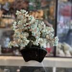 KC119 cay dong linh dang bonsai 150x150 Cây tài lộc đông linh xanh, thân bonsai KC119
