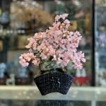 KC120 cay thach anh hong dang bonsai 150x150 Cây tài lộc thạch anh hồng, thân bonsai KC120